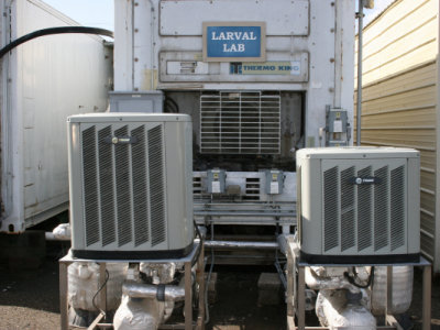 Left and Right Larval Temperature Control Units